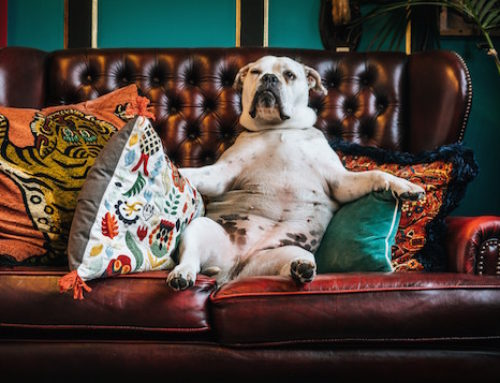 The Best Dog Films to Watch on Netflix