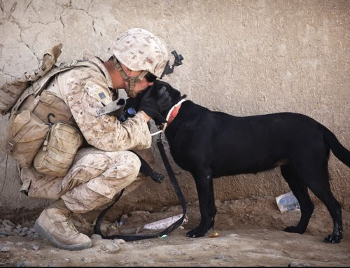 How Service Dogs Help War Veterans